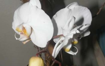the simplest orchid care ever from the orchid whisper, gardening