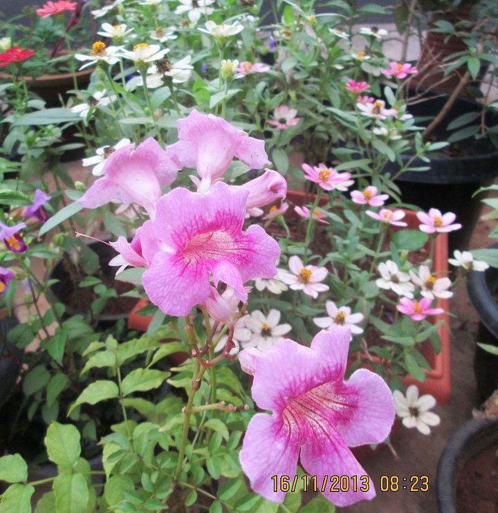flowers in my garden, flowers, gardening