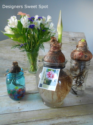 Growing Amaryllis In Water Container Gardening I Used Several Diffe Types Of