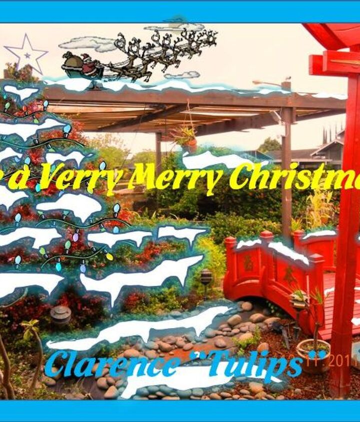 """Have a VERRY MERRY CHRISTMAS in Hometalk land from Mililani, Hawaii!!! Clarence """"Tulips"""""""