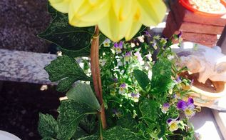 does someone knows what is happening to my dalias, flowers, gardening, Can you see the yellow all over the leaves