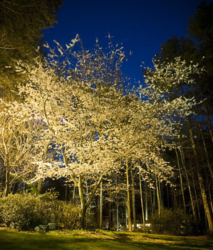 custom outdoor lighting for a spectacular national award winning outdoor garden by, lighting, outdoor living