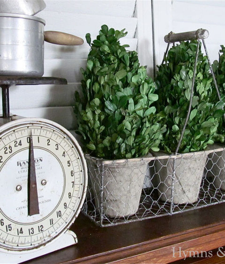 Boxwood topiaries with chicken wire carrier - Marshall's.