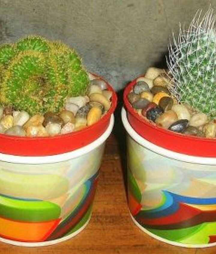 """viola!! no sweat and you got a new """"daintier"""" look of cacti at home"""