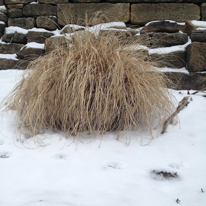 winter walk in the woods, outdoor living, Low mounding grass I love the color and texture it provides in the wintertime