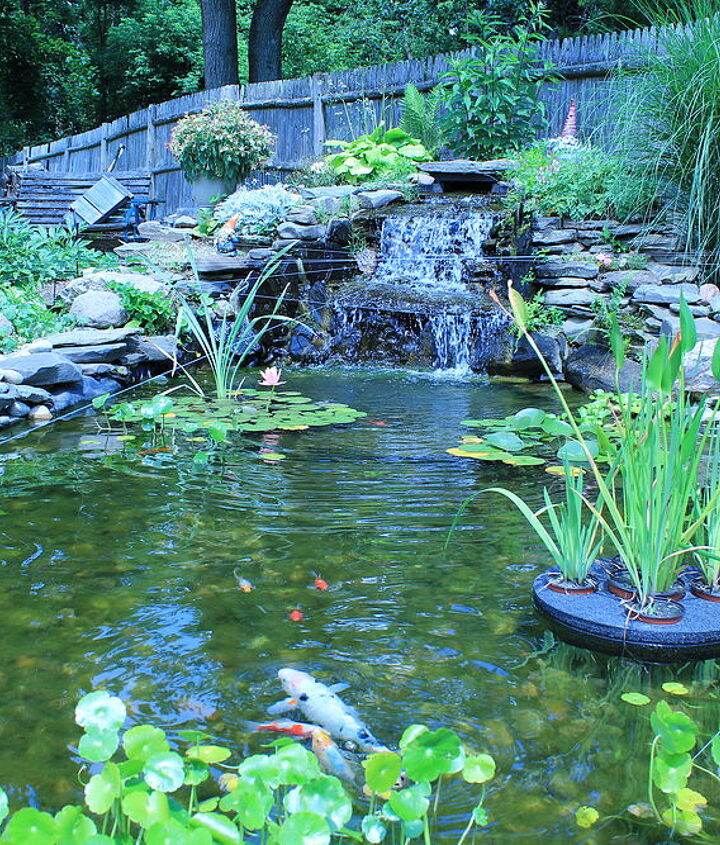 Back yard water garden built by my husband and me... our own personal oasis.