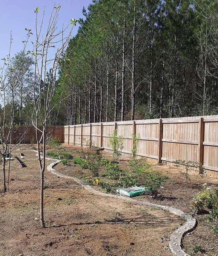 Fruit trees in and base plants/shrubs in....