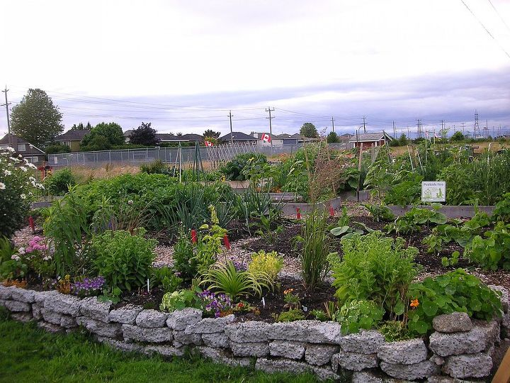Ladner Community Garden's rock wall garden brings plants to eye level. Elevated beds also warm up quickly in the spring.