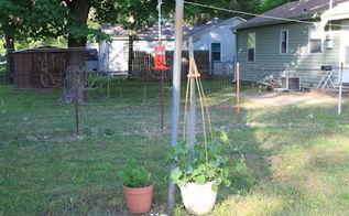 diy backyard butterfly feeder, outdoor living, pets animals
