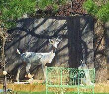 deer painting, gardening, outdoor living, painting
