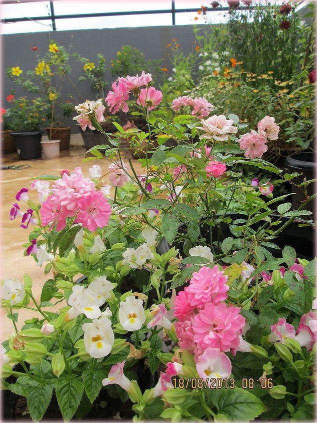 pretty pinks in my garden, gardening