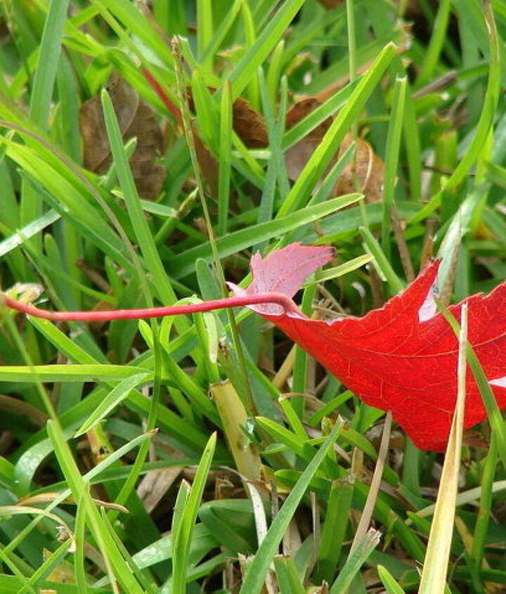 fall in alabama, gardening, landscape, outdoor living