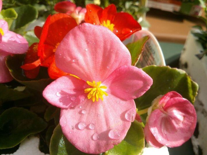 gardener s calendar may, flowers, gardening