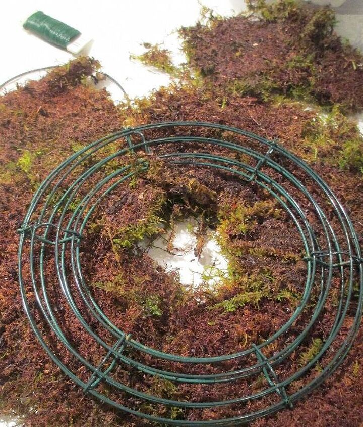 Step # 1 ~ lay wreath form on dampened sheet moss