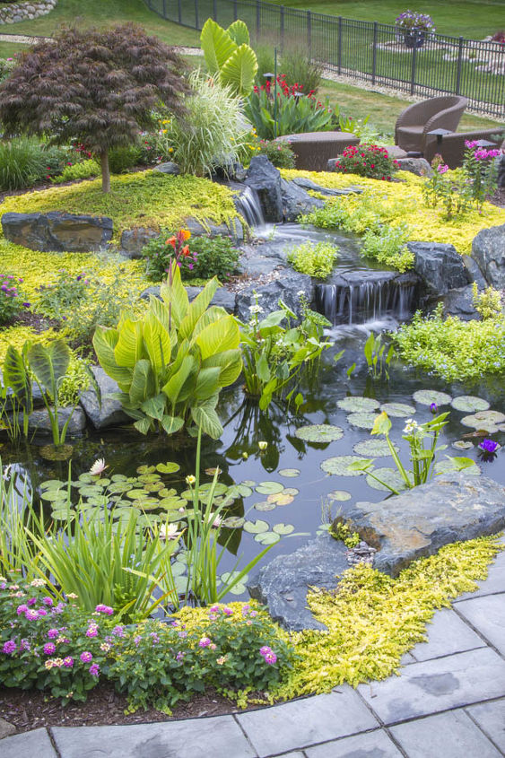 A variety of aquatic plants provide beauty as well as help to filter the pond water.