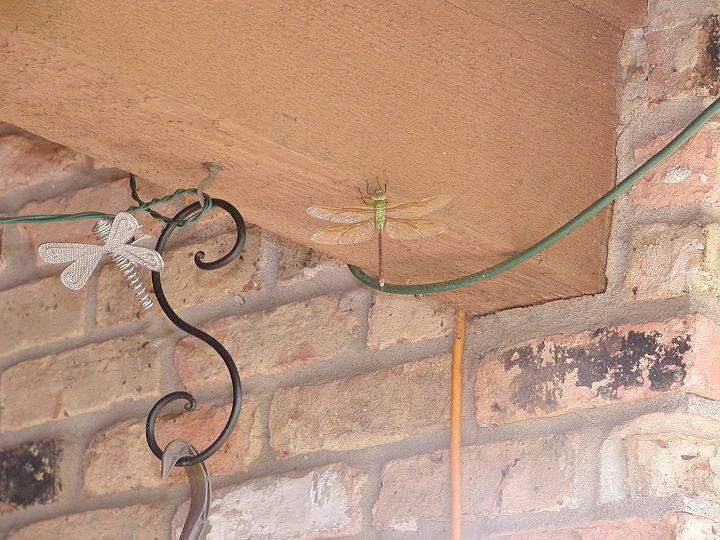 dragonflies in our garden, flowers, gardening, pets animals