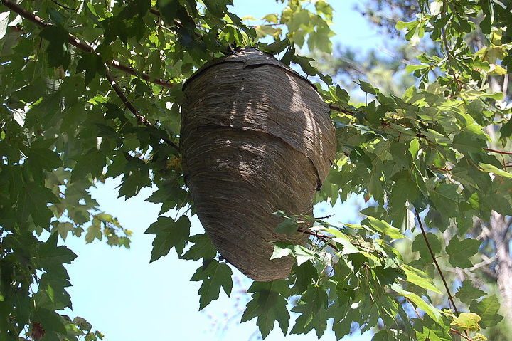anyone know their wasps, pest control