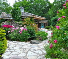 i need a good way to propagate rose plants, gardening, I would like to propagate the rosebush in the foreground on the right Does anybody have any tips