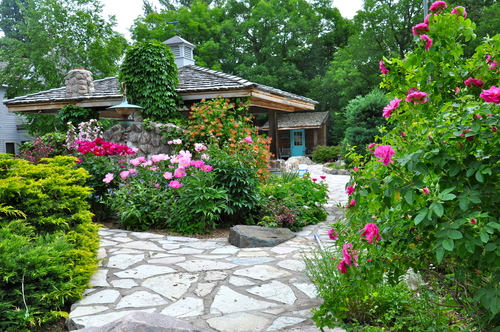 I would like to propagate the rosebush in the foreground on the right. Does anybody have any tips?