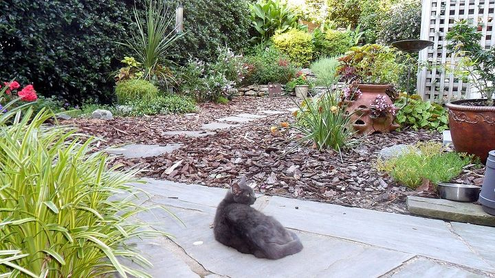 Our cat, Pele, who wandered into our back garden last summer and is now an official resident.
