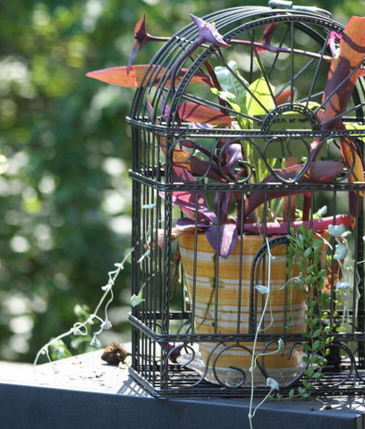 What to do with a thrift store find - bird cage.