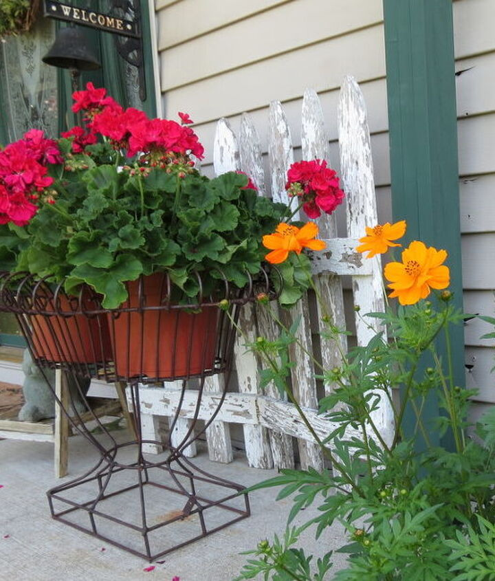 Have a lot of Cosmos growing next to the porch.
