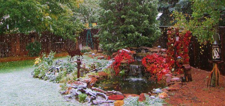 fall and goodbye garden 2014, flowers, gardening