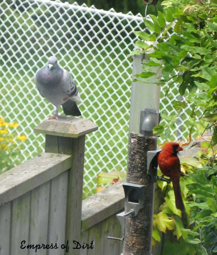Even the most wary birds were comfortable with him. I could call him from the house and he'd fly over and perch nearby.