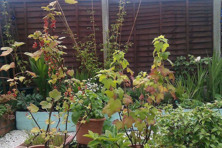 and some fruits and herbs in pots..In future I would like to build more raise beds for veggie garden....
