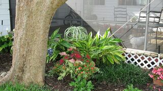 landscaping ideas anyone, flowers, gardening, landscape