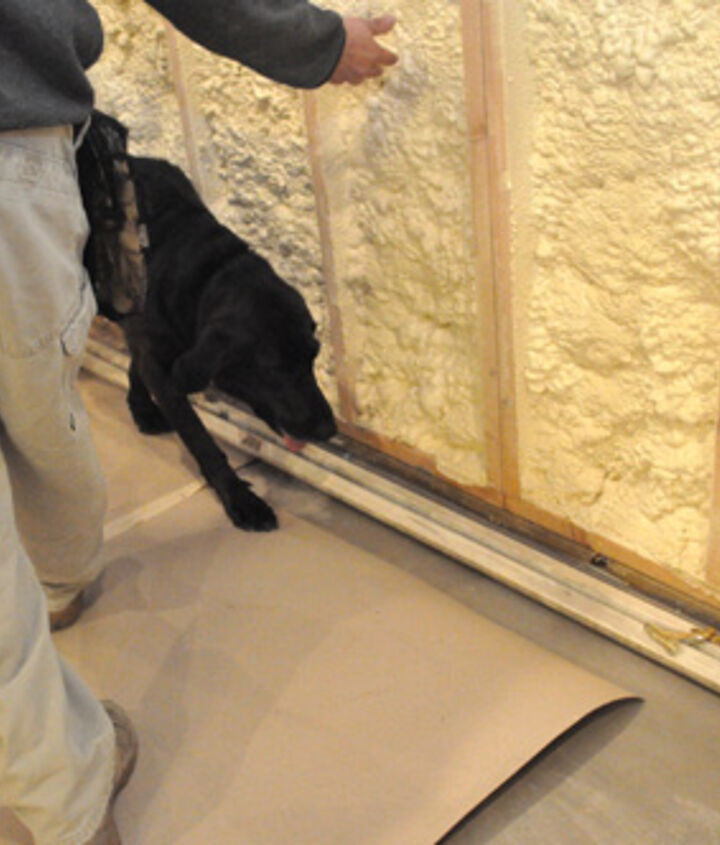 When Sam finds mold, he alerts (sits) and his handler Dave takes a sample.