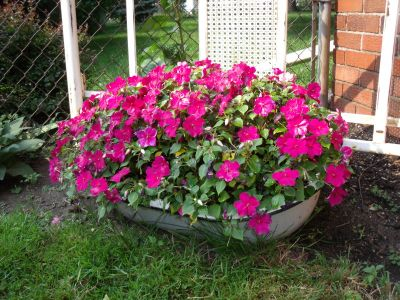 gardening in repurposed planters, gardening, repurposing upcycling