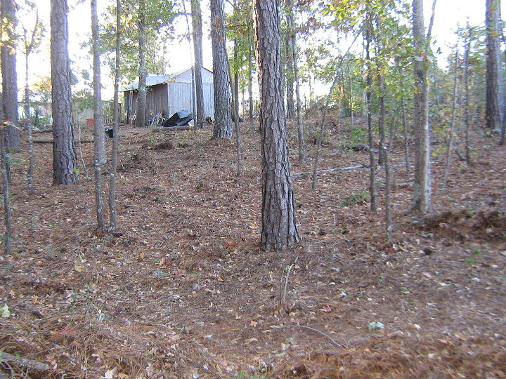 wooded slope needs attention, landscape, This is on the second landing looking toward the first landing where the storage room is located as you can see this is pertty steep