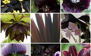 halloween inspired plants, gardening, halloween decorations, seasonal holiday d cor