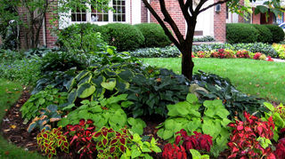 q i ve got to reorganize my yard open to suggestion, flowers, gardening, landscape, Here s an example of a nicely planted colorful shade bed from