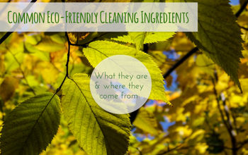 Common Eco-Friendly Ingredients: What They Are & Where They Come From