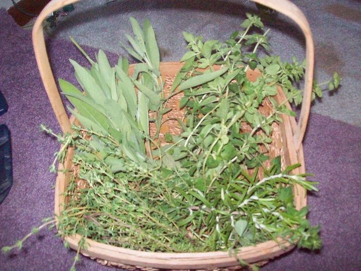Harvesting some Sage, Oregano, Rosemary and Thyme to dry