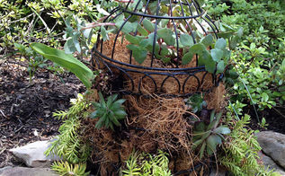 bird cage succulent planter, flowers, gardening, repurposing upcycling, succulents