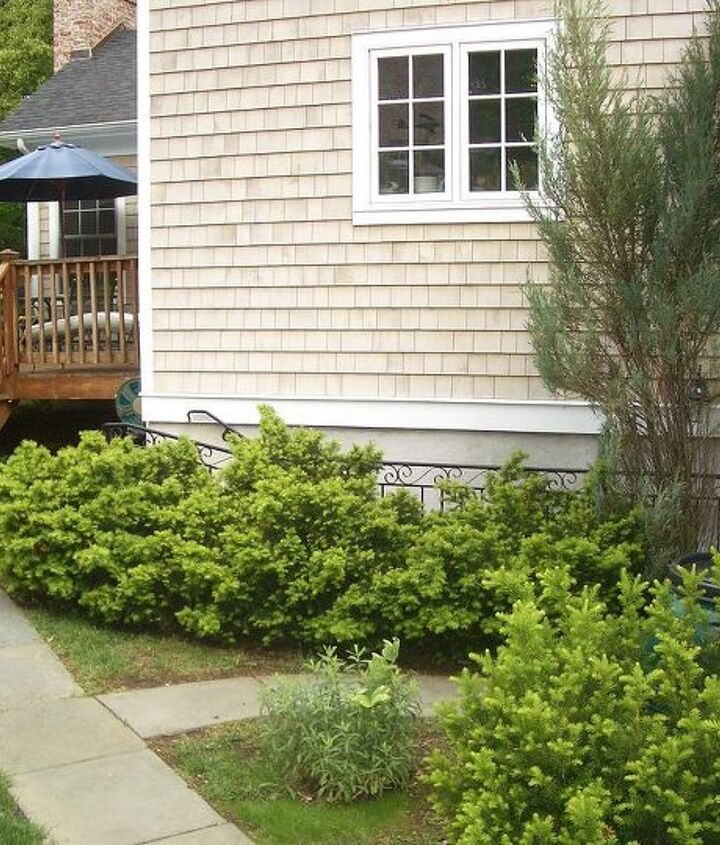 Before of path and deck