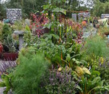 a different spin on the vegetable garden, container gardening, gardening, beans fennel swiss chard and more
