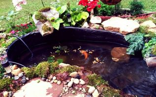 home sweet koi pond, gardening, outdoor living, ponds water features, Dinner time