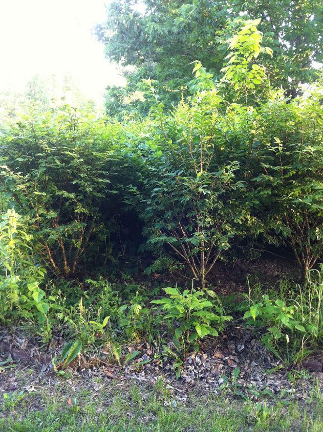 Secret Hidden Garden with Peonies in Illinois