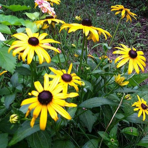a peek into my garden, flowers, gardening