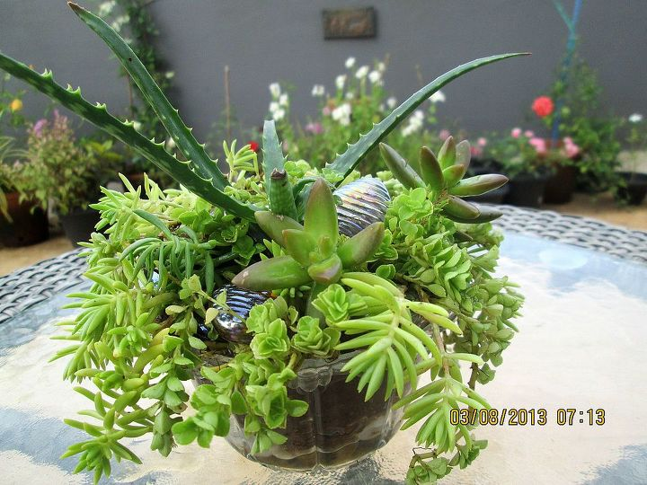 my very first succulent container, container gardening, flowers, gardening, succulents