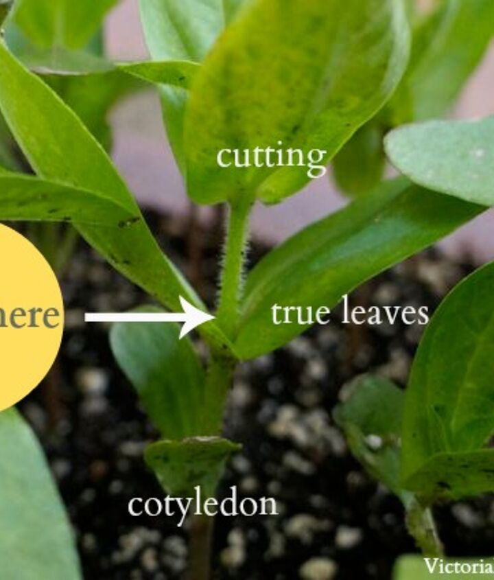 How to grow cuttings. Step-by-step instructions.  http://victoriaelizabethbarnes.com/how-to-grow-cuttings/