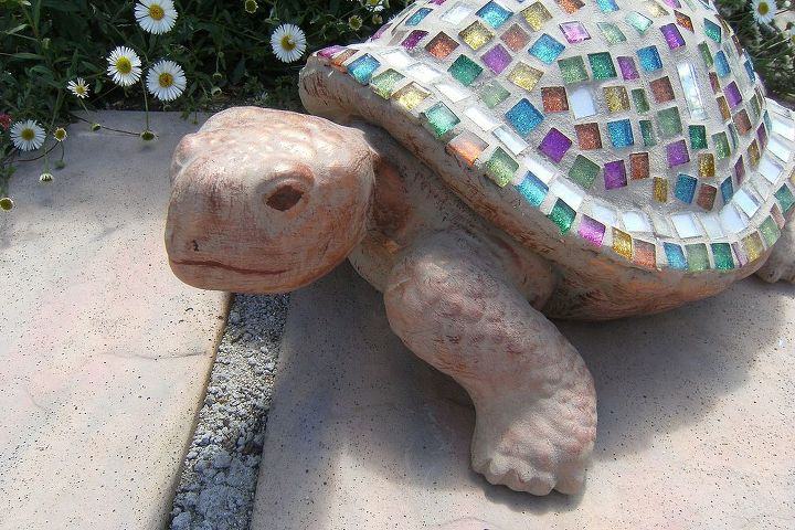 Joseph, the tortoise, in his 'Dream coat'!