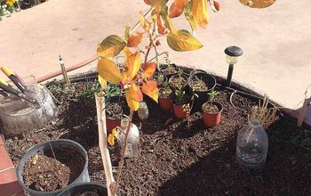 yellow apple trees s leaves, gardening, Does someone knows why my little apple trees are yellow