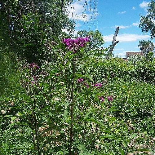 weed or keeper, gardening