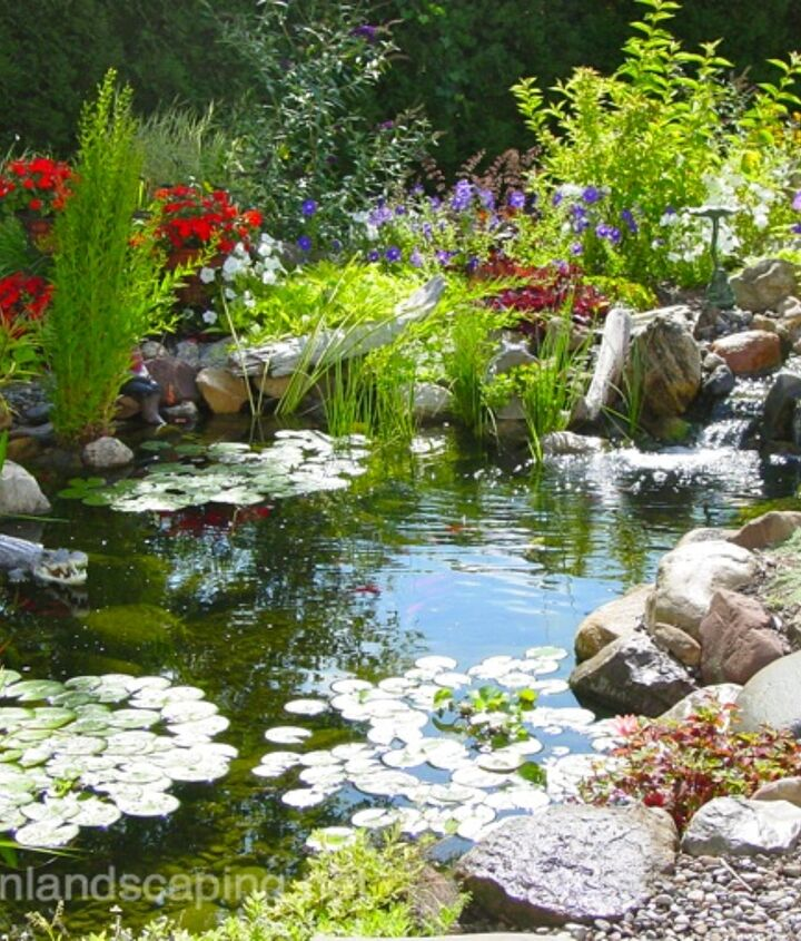 Before putting the fish back, add a little de-chlor and bacteria. With proper spring pond maintenance and a little regular maintenance, you can sit back and enjoy your water garden for the rest of the season with very little to do.