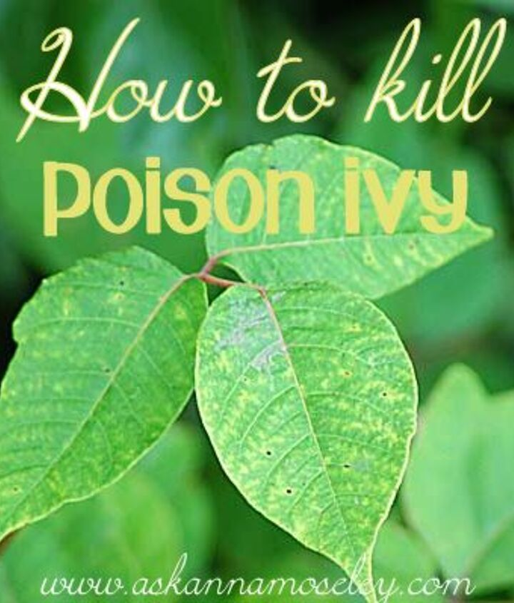 suggestions for killing poison ivy, gardening